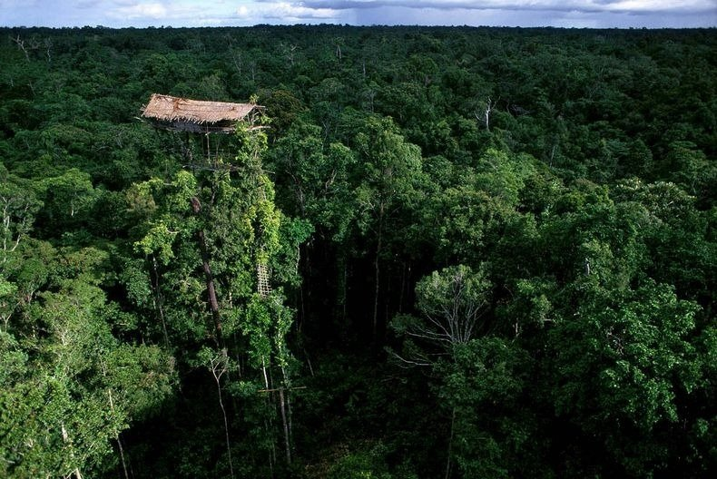 Una casa sugli alberi costruita della tribù dei Korowai