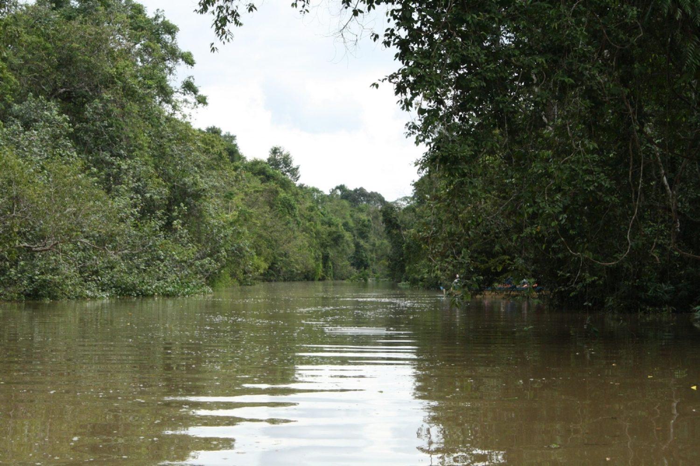 Safari sukau fiume Kinabatangan
