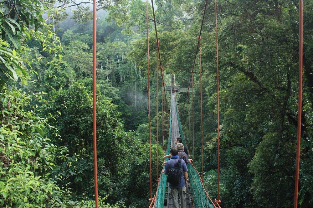 Turisti sul Ponte sospeso di Danum Valley in Sabah, Malesia