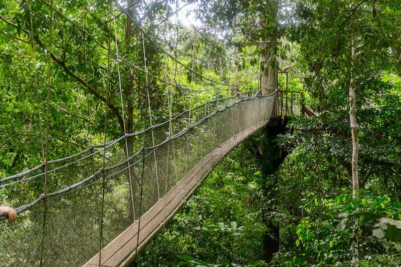 Ponte sospeso nella giungla di Mulu
