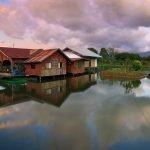 Beve introduzione del Borneo