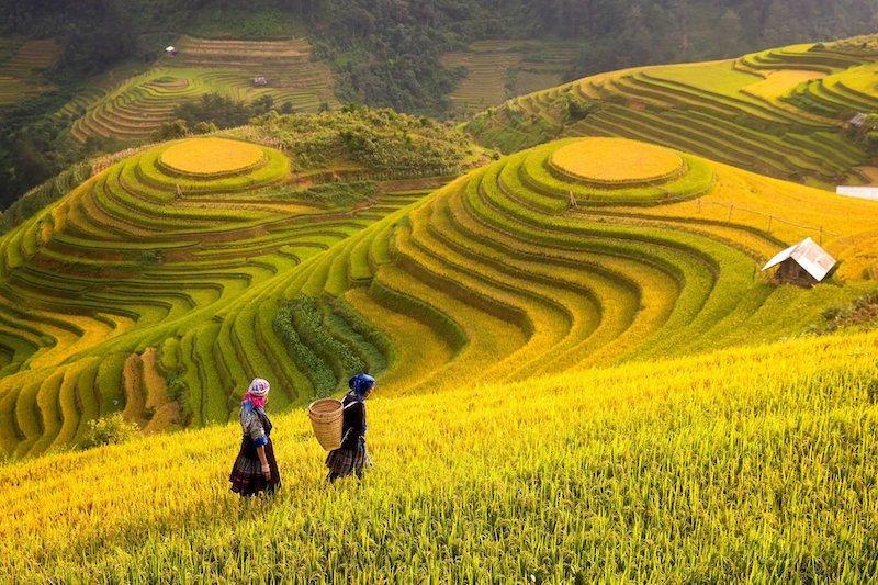 scenografiche terrazze di riso a Sapa Vietnam
