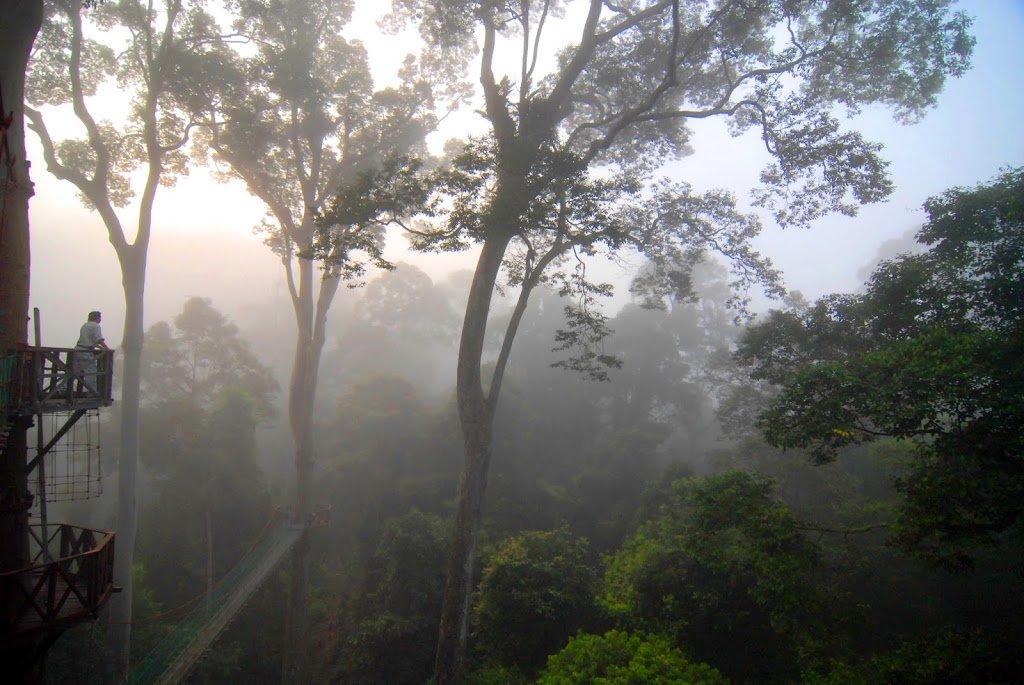 Alba nella foresta pluviale a Danum Valley in Sabah, Malesia