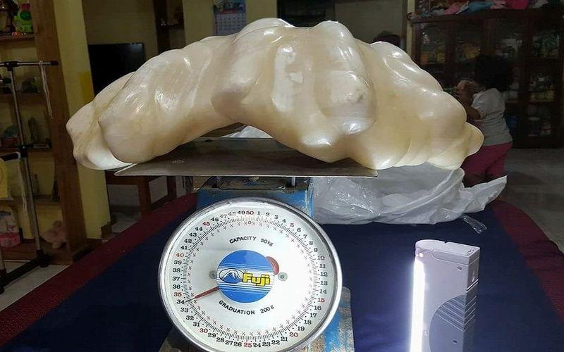La perla più grande del mondo trovata a Palawan nelle Filippine