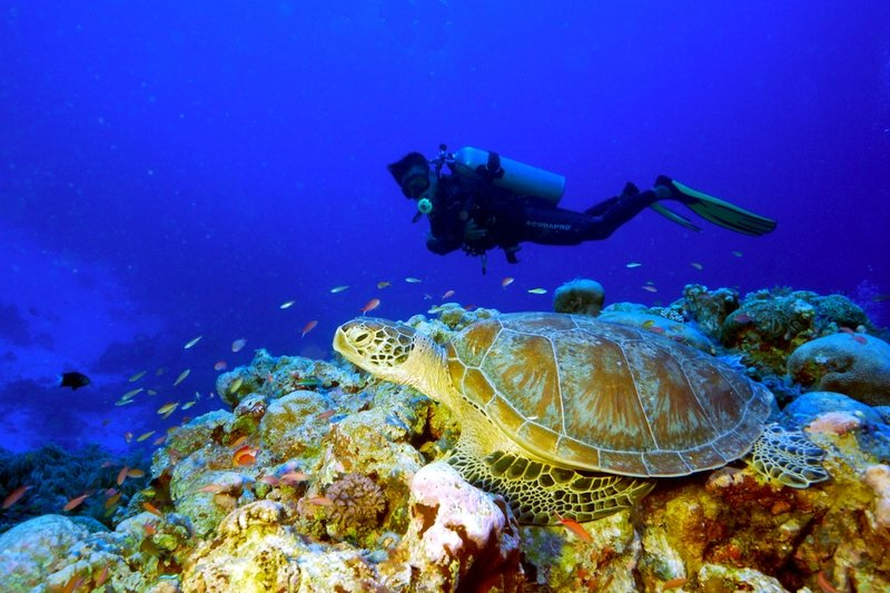 Immersioni a Coron Palawan Filippine