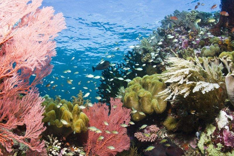 Immersioni a Wakatobi Indonesi