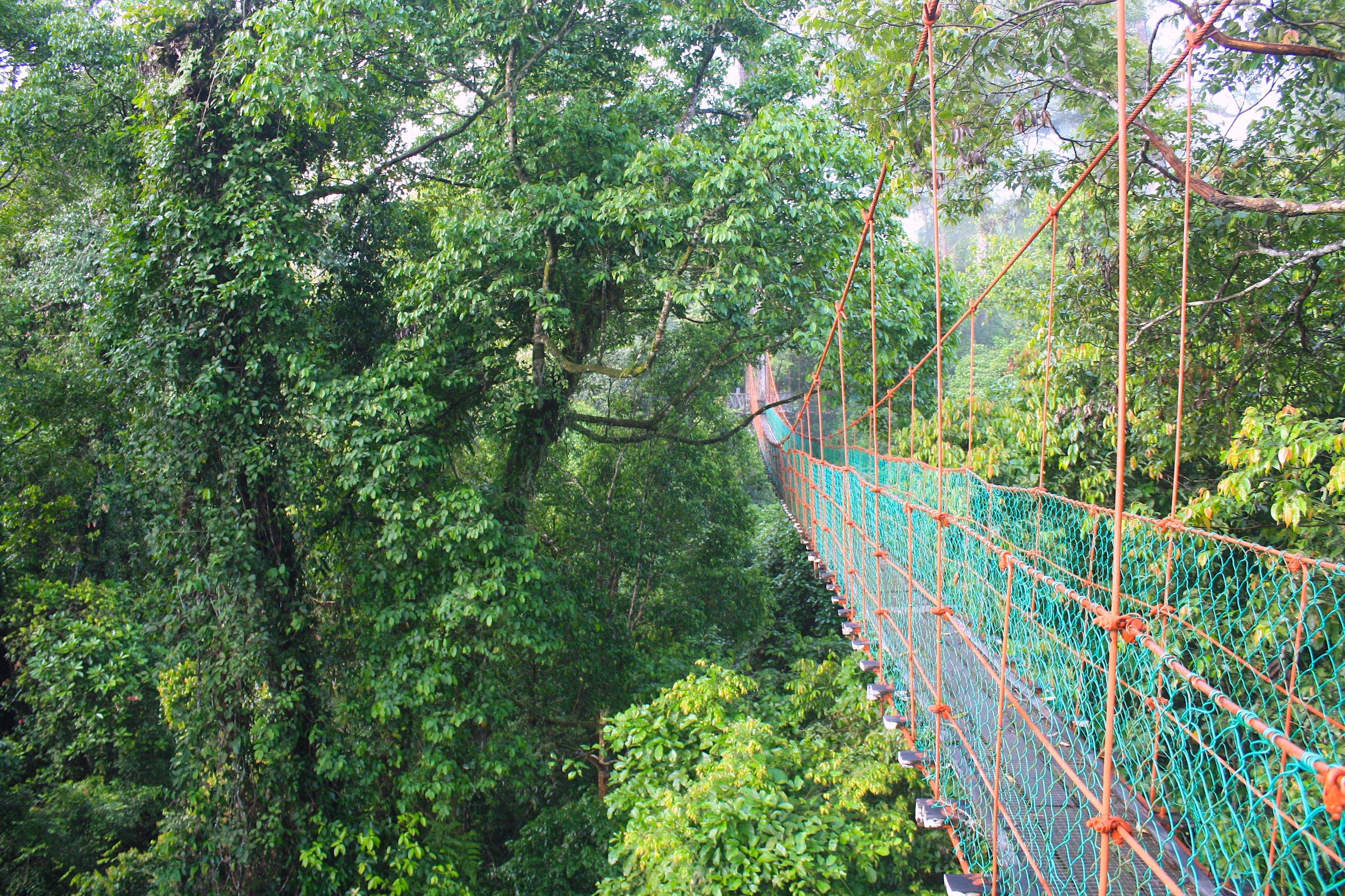 Ponte Sospeso di Danum Valley