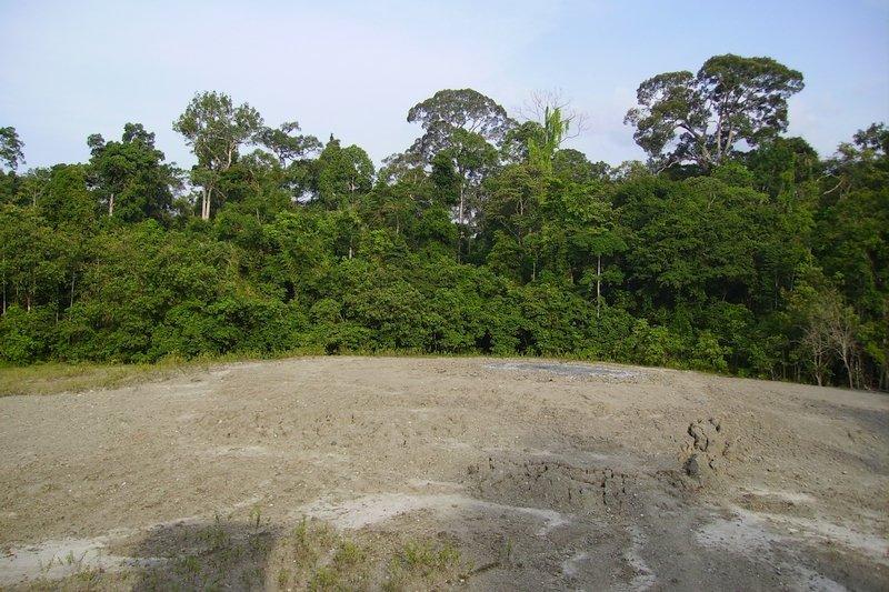 Vulcano di fango nella foresta di Tabin