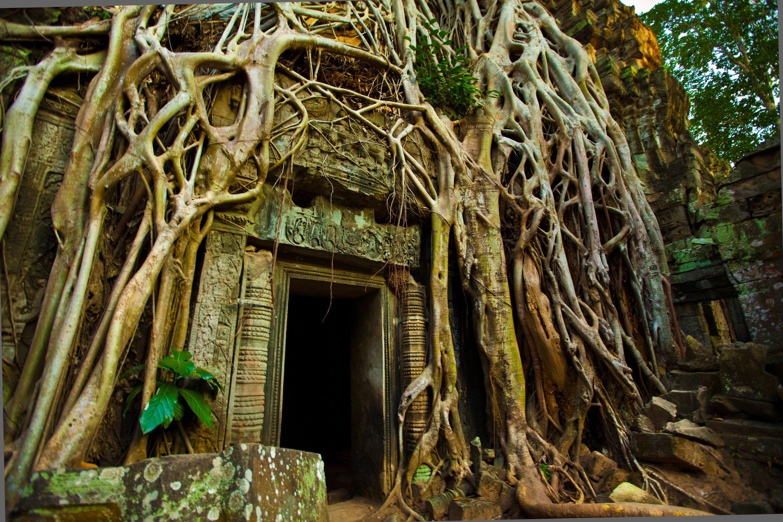 Tempio Ta Prohm coperto di alberi a Angkor Wat, Cambodia