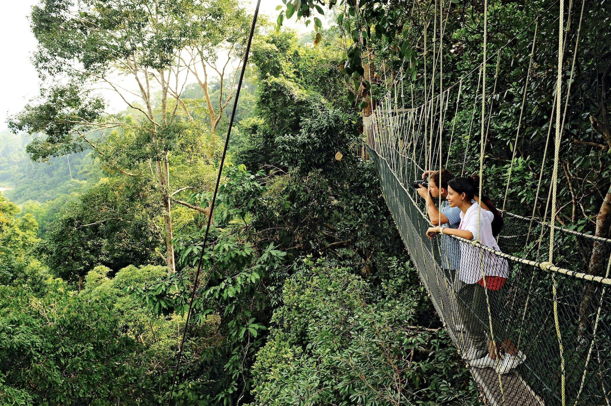 Turisti sul ponte sospeso di Taman Negara, Malesia