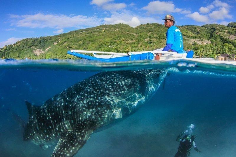 Barca che porta i turisti dove ci sono gli squali balena a Oslob