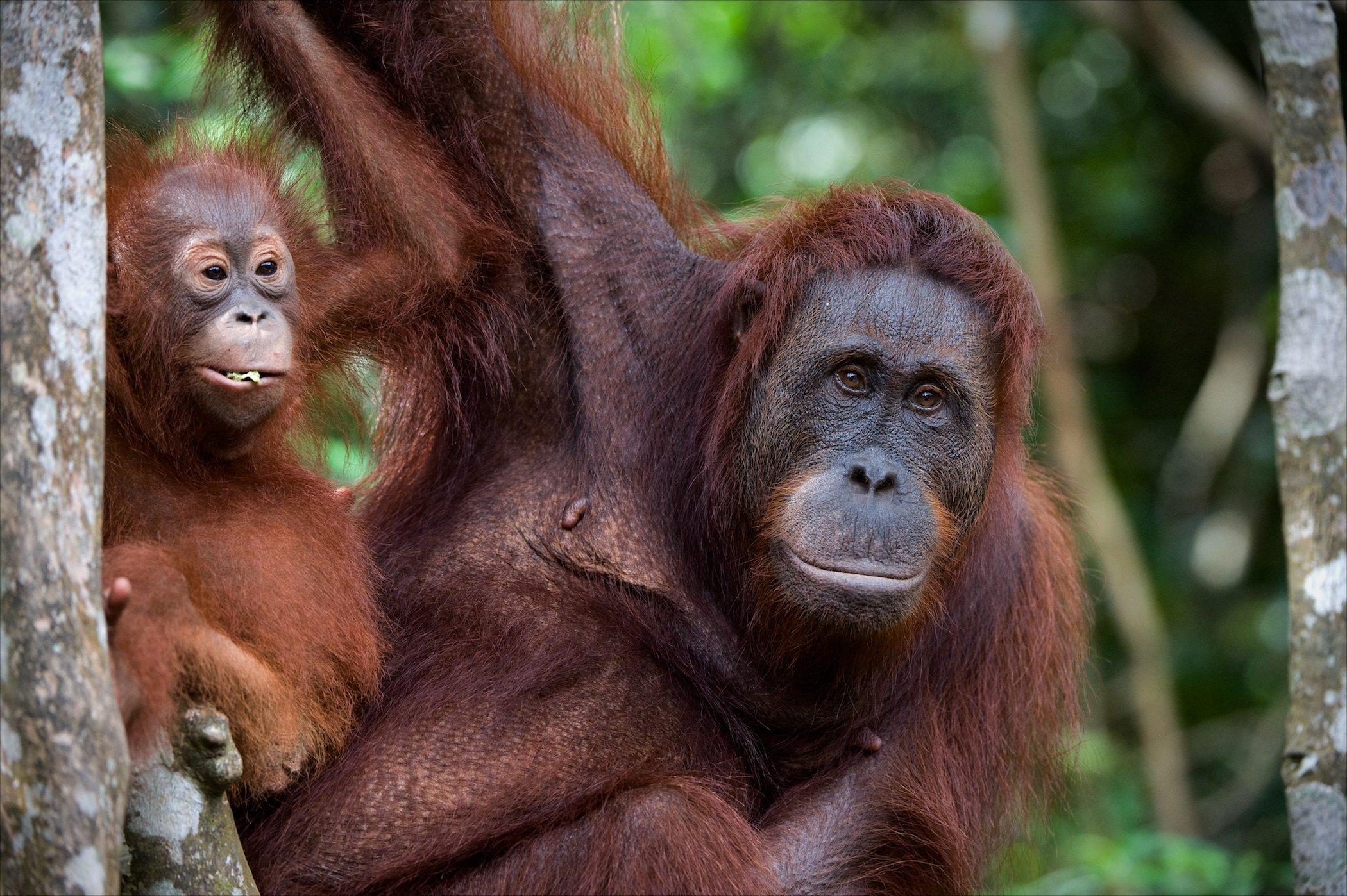 Borneo Tours